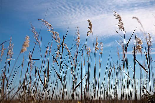Dan Carmichael - Sea Oats and Sky on Outer Banks
