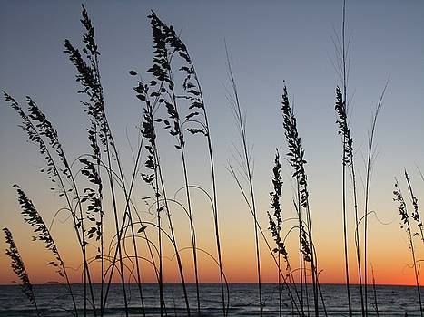 Sea Oats at Sunset by CG Abrams