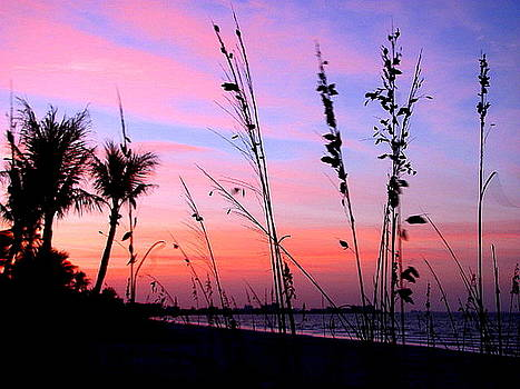 Sea Oats at Sunset by Tricia Kett