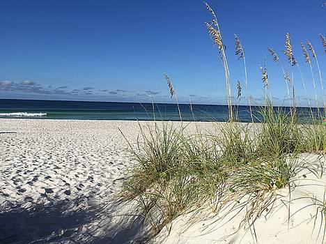 Sea Oats at the Beach by Leslie Brashear