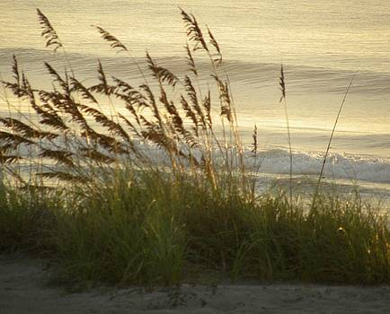 Sea Oats by Kim Zwick
