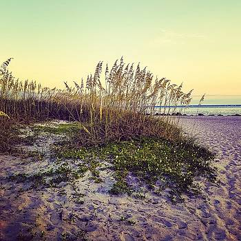 Sea Oats by Kimberly Dawn Clayton
