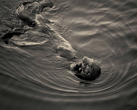 David Gordon - Sea Otter III Toned