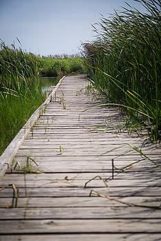 Sea Rim Boardwalk by Amanda Adkisson