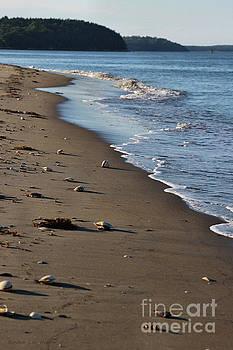 Sandra Huston - Sea Sells Galore