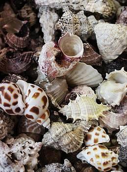Paulette Thomas - Sea Shell Assortment