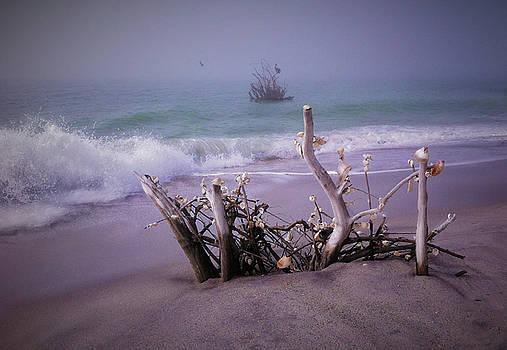 Sea Shells by Deborah Jahier