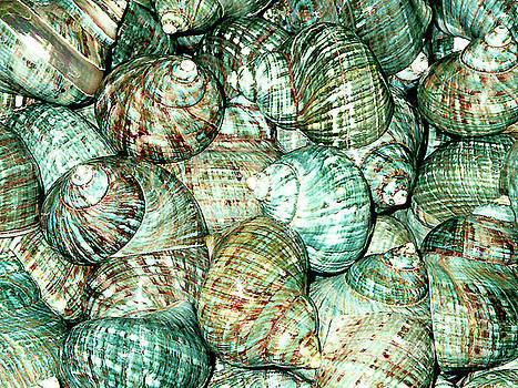 Sea Shells for Sale - Florida Keys by Merton Allen