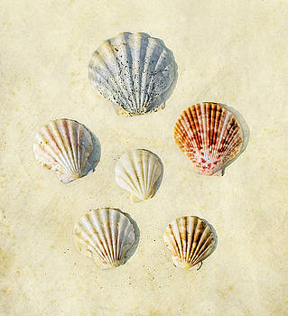 Sea Shells by Paul Grand