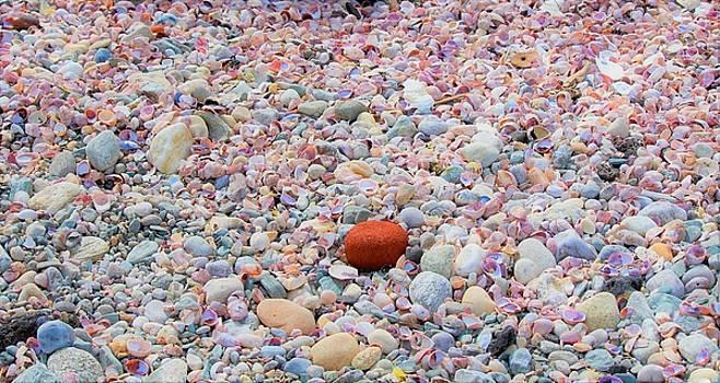 Sea Shells by Stacie Fernandes