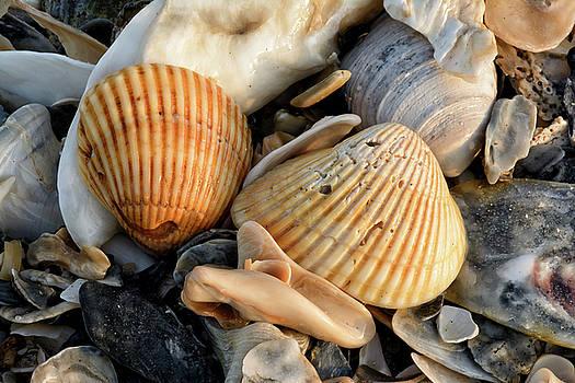 Sea Shells by Thomas Pettengill