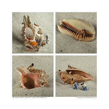 Rolf Bertram - Sea Shells With Preiser Figurines Number One