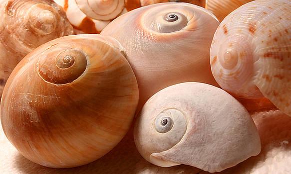 Barbara  White - Sea Spirals