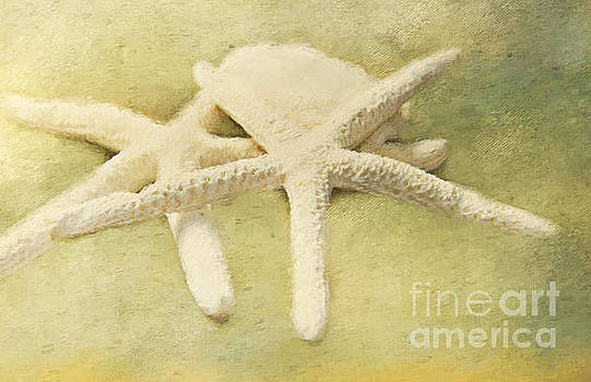 Sea Stars by Pam  Holdsworth