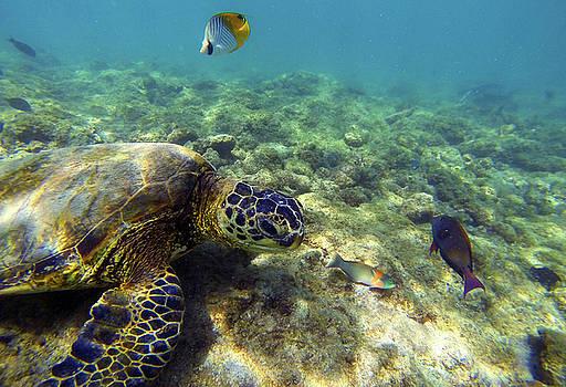 Sea Turtle #1 by Anthony Jones