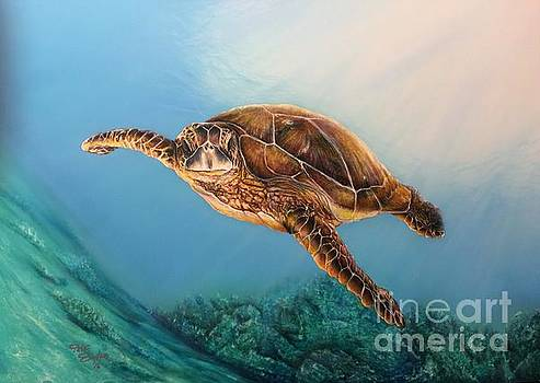 Sea Turtle 1 by Pete Sintes