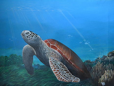 Sea Turtle 4 by Anthony Fotia