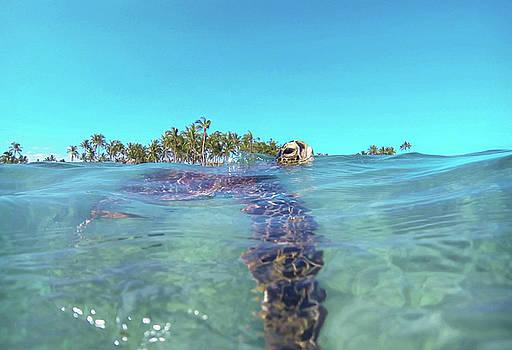 Sea Turtle #4 by Anthony Jones