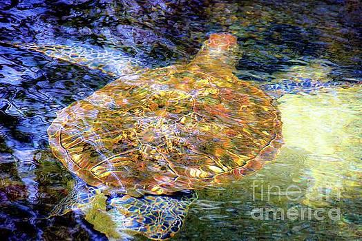 Sea Turtle in Hawaii by D Davila
