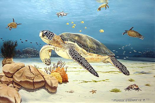 Sea Turtle Jamboree by Marc Stewart
