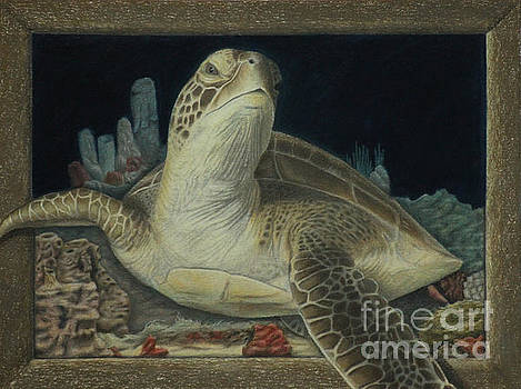 Sea Turtle by Jennifer Watson