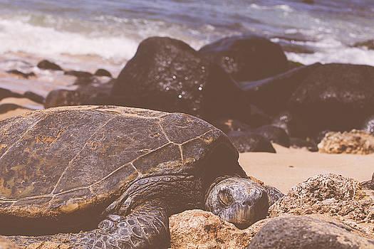 MARVIN JIMENEZ - Sea Turtle