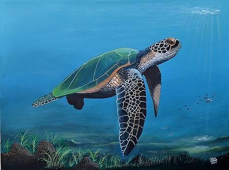 Sea Turtle V by Anthony Fotia