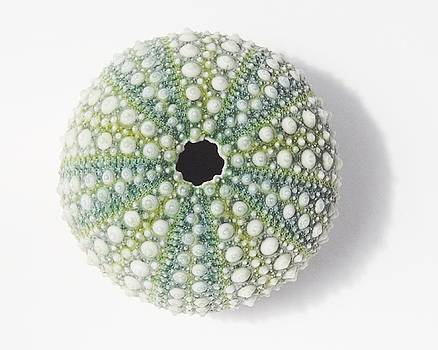 Sea Urchin by Jocelyn Friis