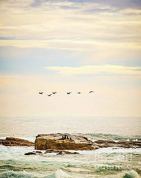Tim Hester - Seabirds and Seals