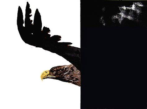 SeaEagle by Cass Oest