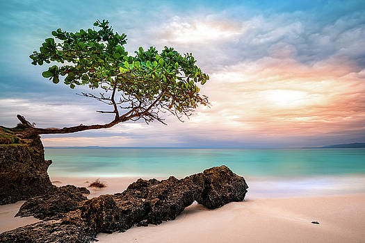 Seagrape Tree by Mihai Andritoiu