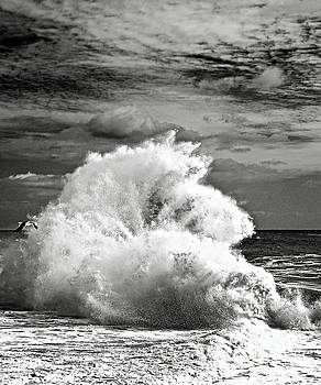 Seagull and a Wave BW by Michael Cinnamond