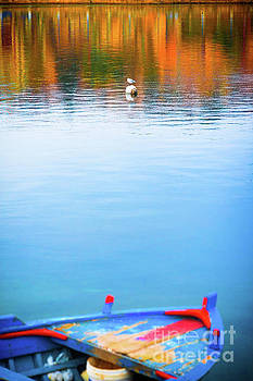 Seagull and boat by Silvia Ganora