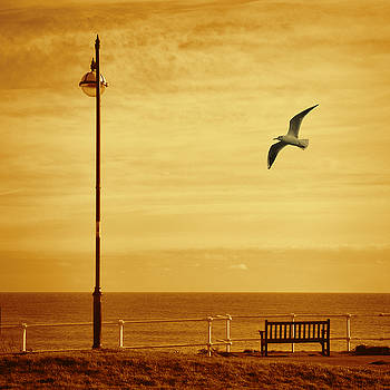 Seagull and Seat by Martin Fry