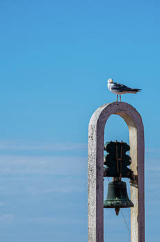 Seagull and the bell by Paulo Goncalves