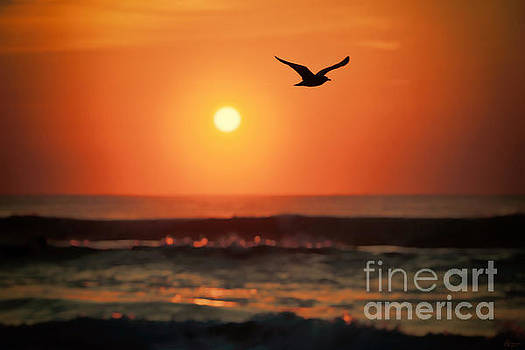 Seagull At Sunrise by Jeff Breiman