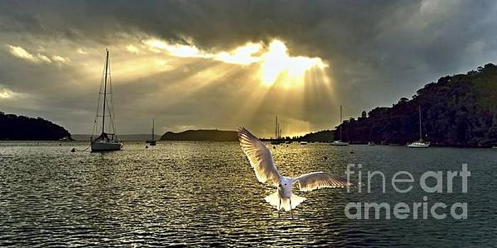 Seagull at Sunrise with Crepuscula Rays. by Geoff Childs