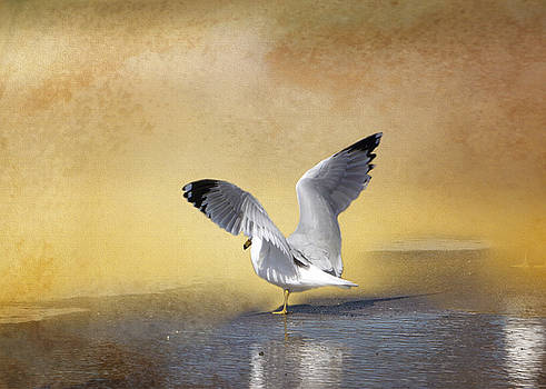Seagull at Sunset by TnBackroadsPhotos