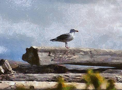 Seagull by Chris Bird