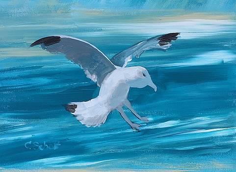 Seagull by Christina Schott