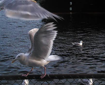 Kathi Shotwell - Seagull Circus