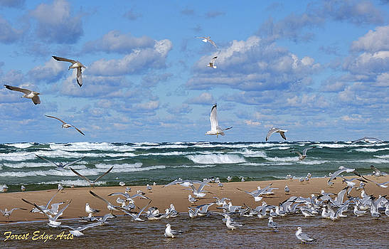 Seagull Convention by Dick Bourgault