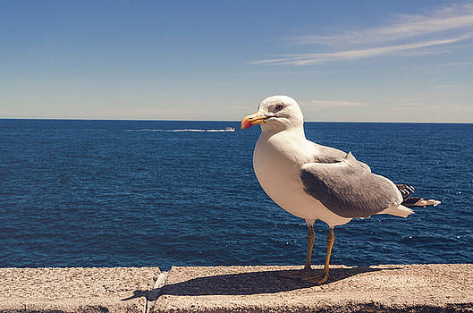 Seagull by Chris M
