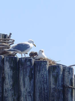 Seagull Family by Keelee Martin