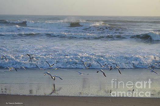 Seagull flight by Tannis Baldwin
