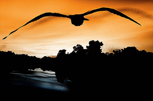 Seagull fly in the sky by Fernando Cruz