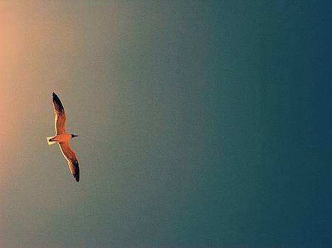 Seagull flying in sunset by Terry and Brittany Sprinkle