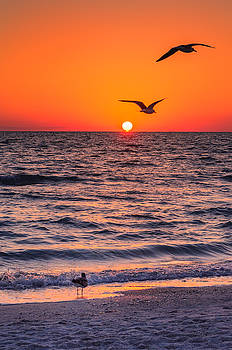 Seagull Hat-Trick by Craig Szymanski