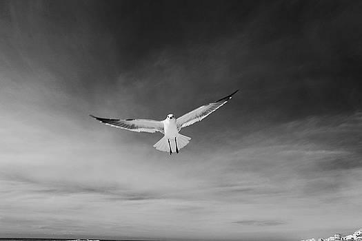 Seagull Hug by Jim Clark