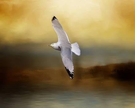 Seagull in Flight by TnBackroadsPhotos